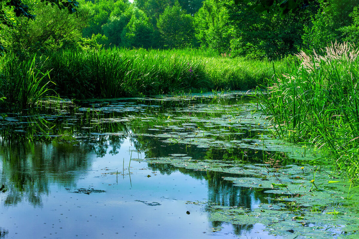 Four seasons in the Spreewald