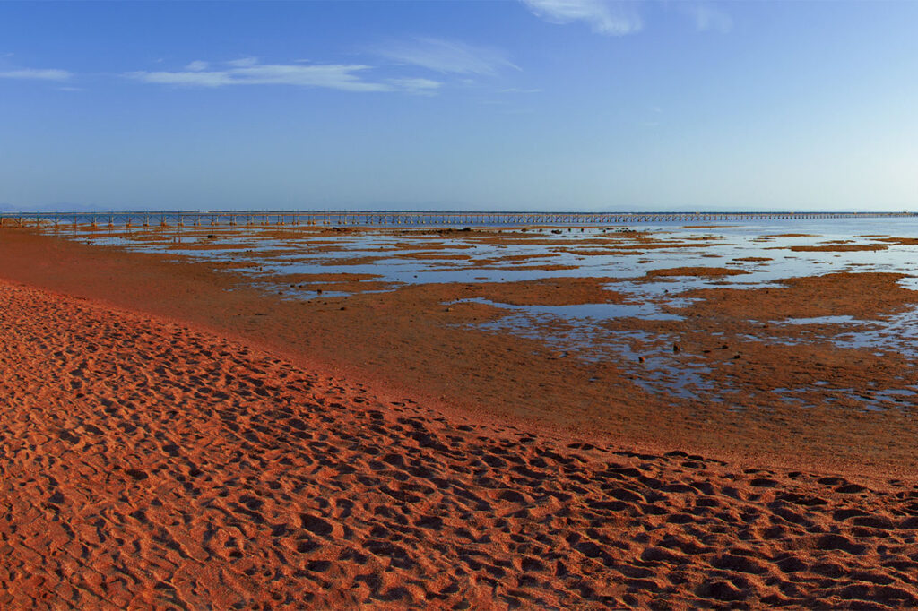 On the Gulf of Aqaba in Sinai