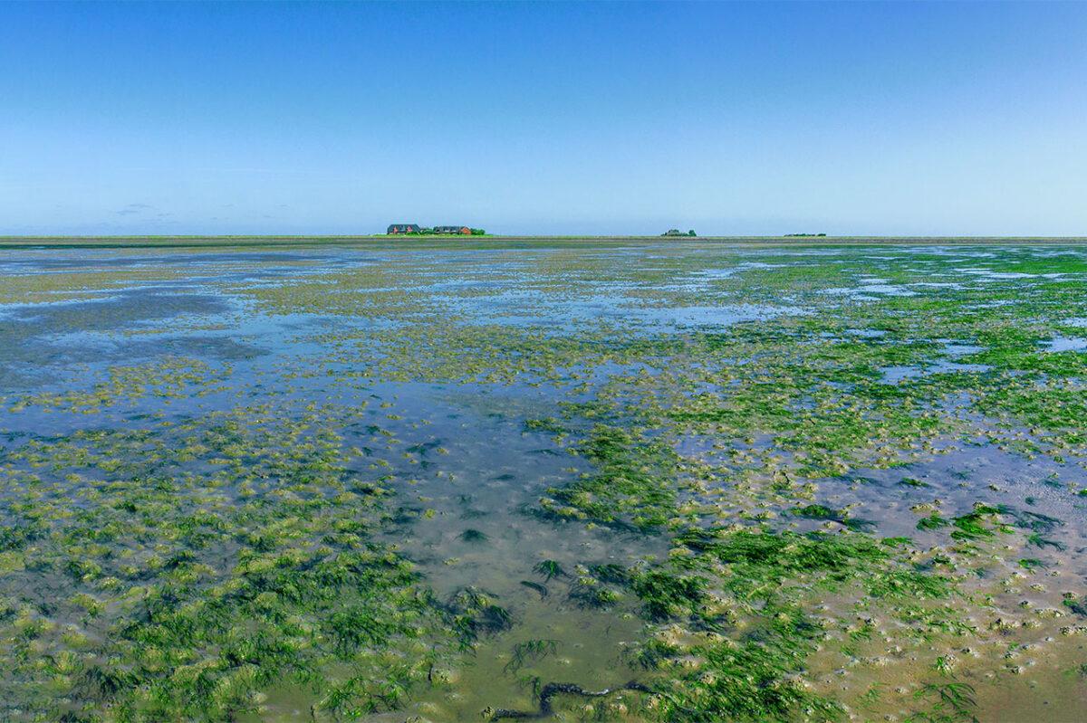 The Hallig islands in the North German Wadden Sea