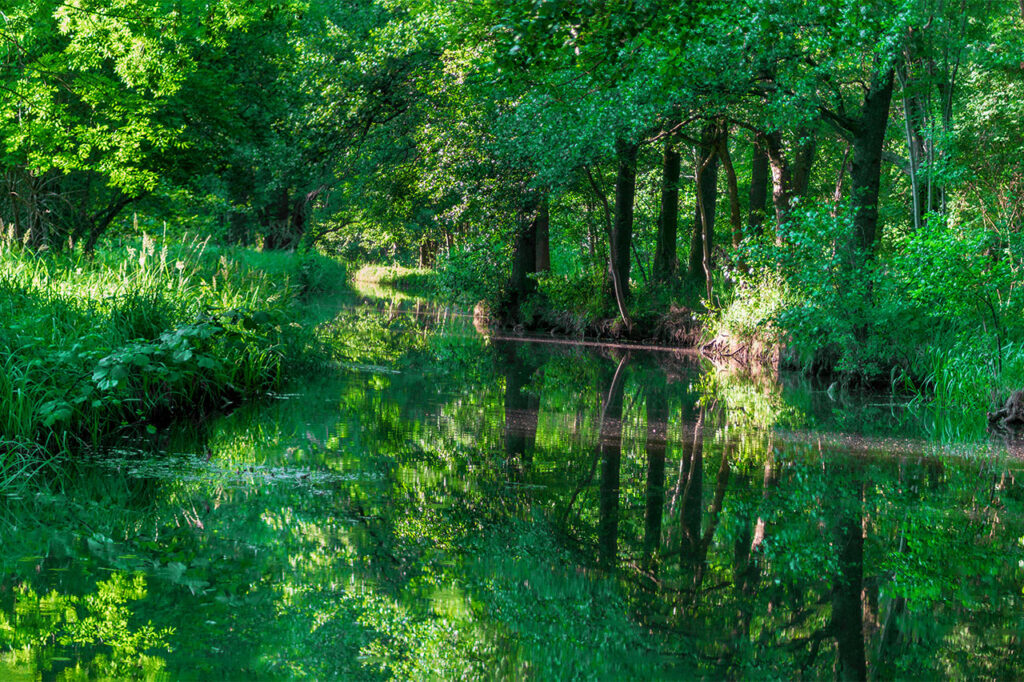 Things to do in the Spreewald